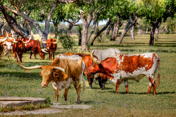 Longhorn Convention